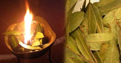Lose Weight Market sddefault-1-390x205 Burn some bay leaves in your house and this will happen in just 10 minutes. Amazing